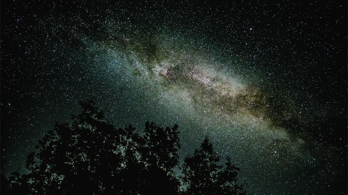 Stars in the night sky, a tree top in shadow at the bottom